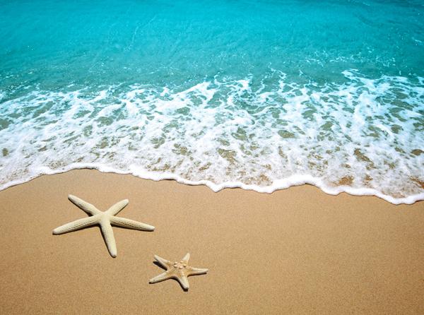 海とヒトデ